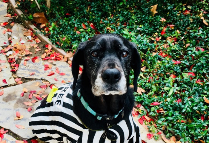 HAPPY HALLOWEEN - OUR TIPS FOR CANINE SAFETY
