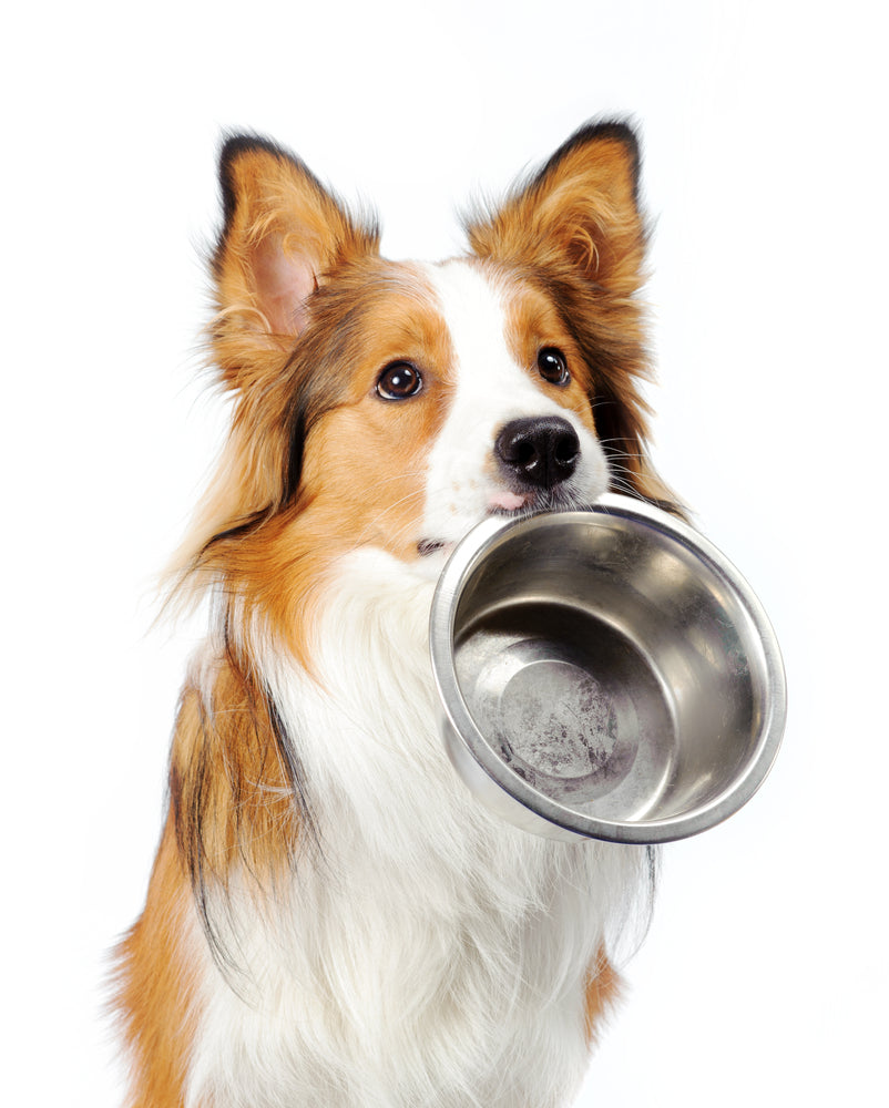 ARE COMMON ALLERGENS HIDING IN YOUR DOG'S FOOD?