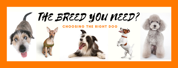 The breed you need?