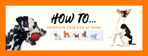 How to Entertain Your Dog at Home