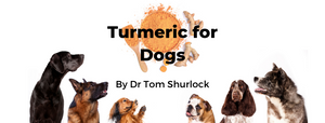 Turmeric for Dogs by Dr Tom Shurlock