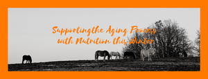 Supporting the Aging Process with Nutrition this Winter