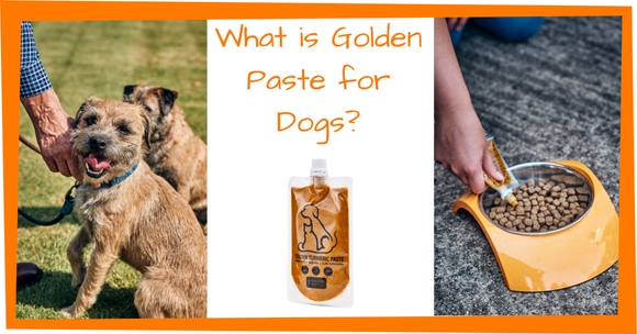 Golden Paste for Dogs