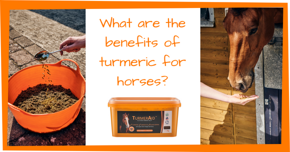 What are the benefits of turmeric for horses?