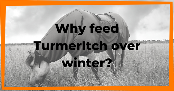 TurmerItch: Not just for Summer!
