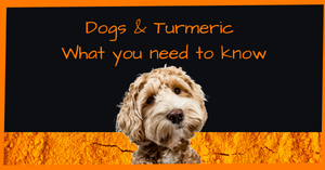 Dogs & Turmeric – What you need to know