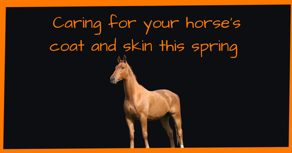 Caring for your horse's coat and skin this spring