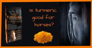Is turmeric good for horses?