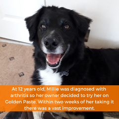 millie was diagnosed with arthritis