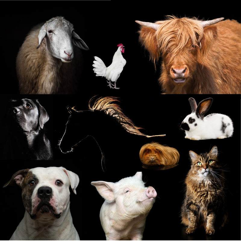 Products For Animals