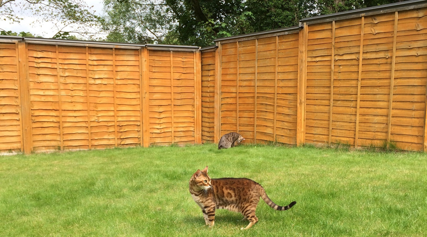rolling cat fence