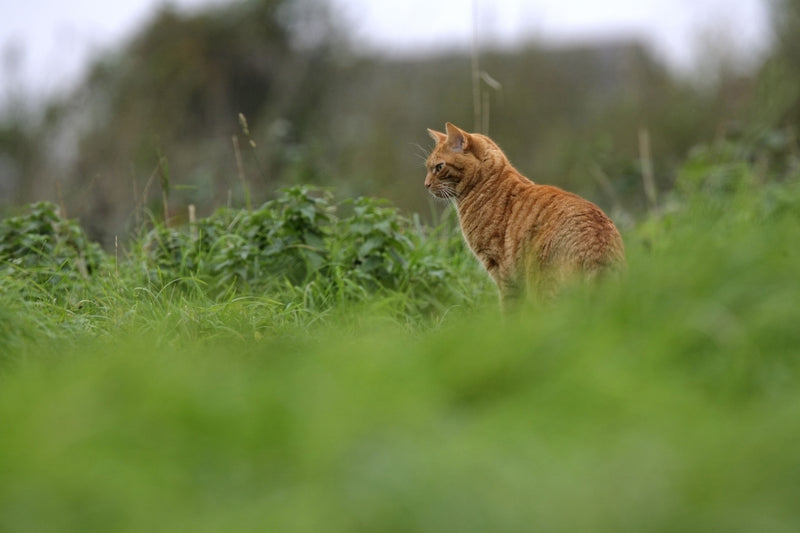 Free-roaming cats are a danger to native wildlife Cat Proof Yard - Oscillot® Cat-Proof Fence