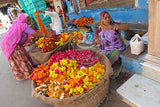 India: The Flower Shop - Rajasthan