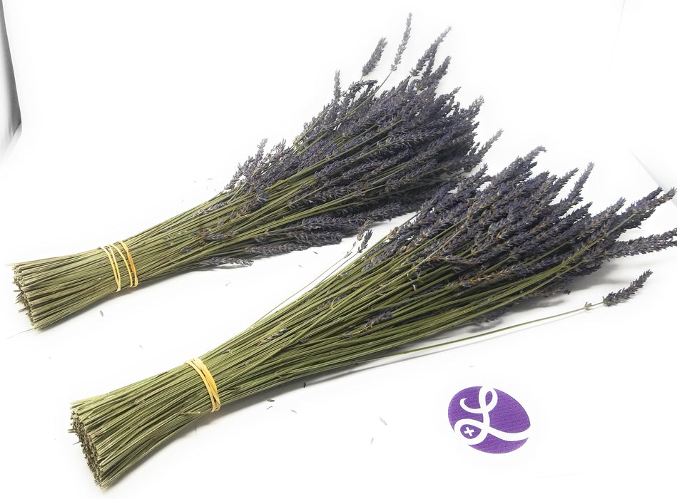 "Lavender Dried Bundles (Lavender Grosso) - 18"" to 22"" L"