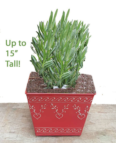Gift Planters - Include Plant and Planter