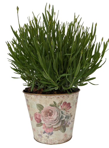 Tin Rose Vase With Lavender Plant, Perfect Gift For Mom!