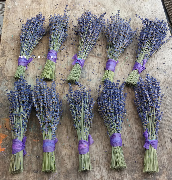 "Lavender Small Dried Bundles 8"" to 10"" - Pack of 10 - Findlavender"