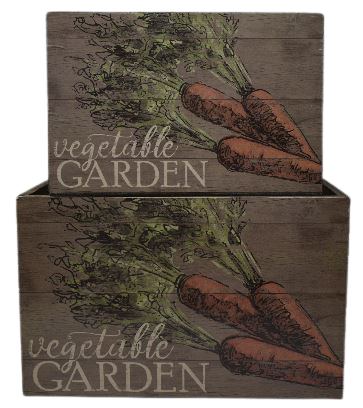 Carrot Vegetable Planters Set