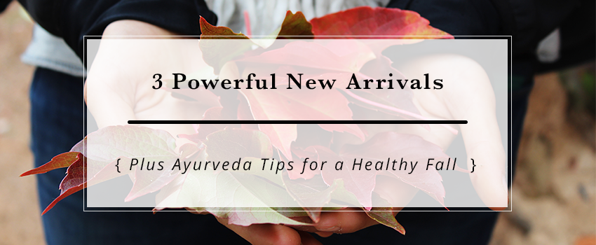 3 Powerful New Arrivals + Practical Guide to a Happy Fall