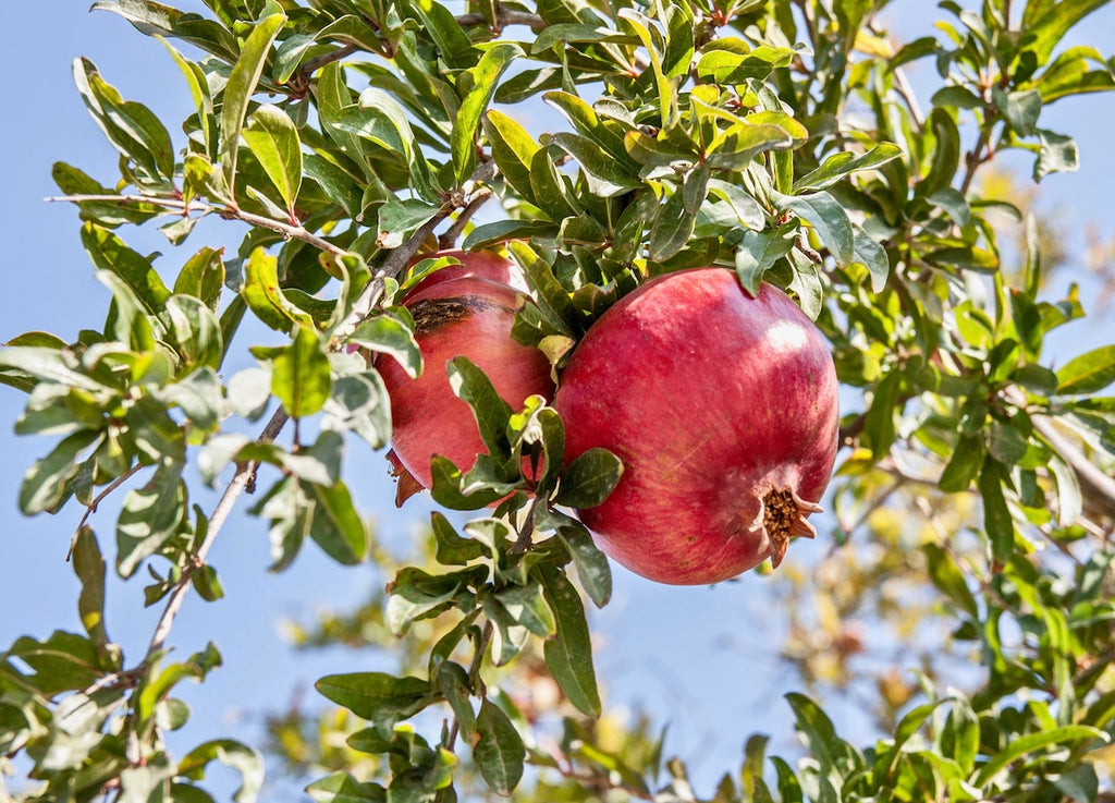 Pomegranate: The Antioxidant Jewel for Better, Brighter, Healthier Skin