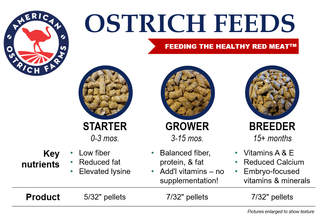 Our Ostrich Feeds