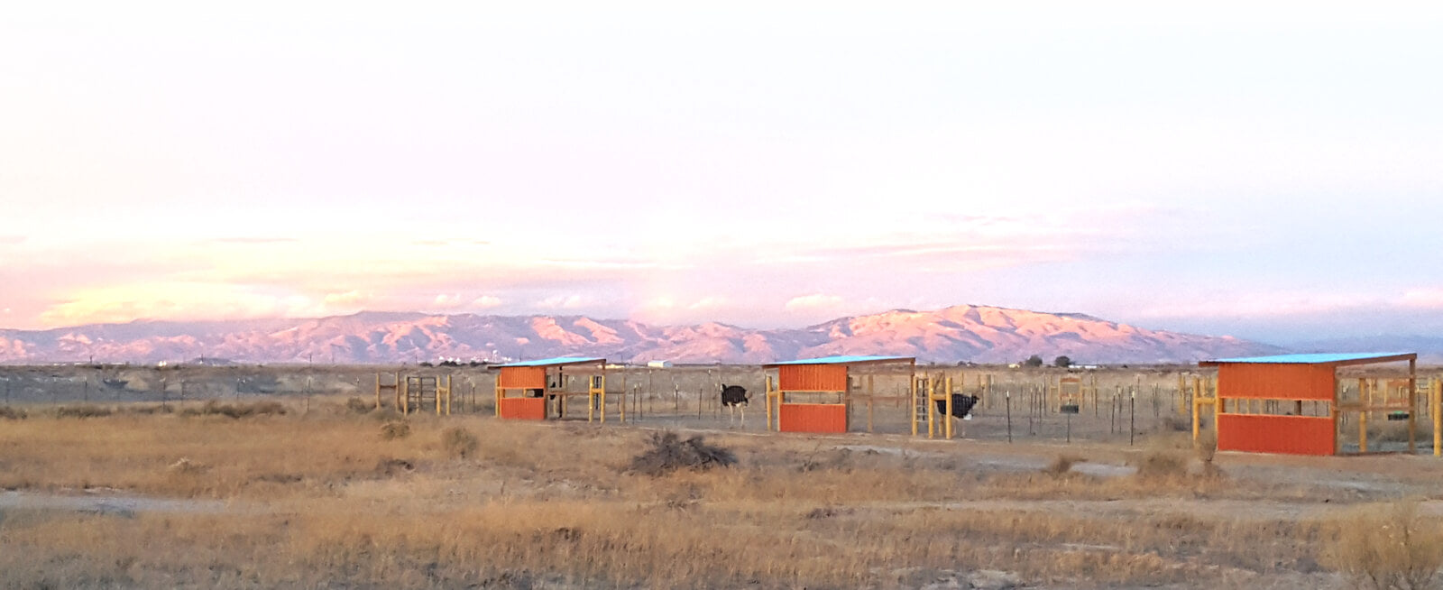 American Ostrich Farms in Kuna, Idaho