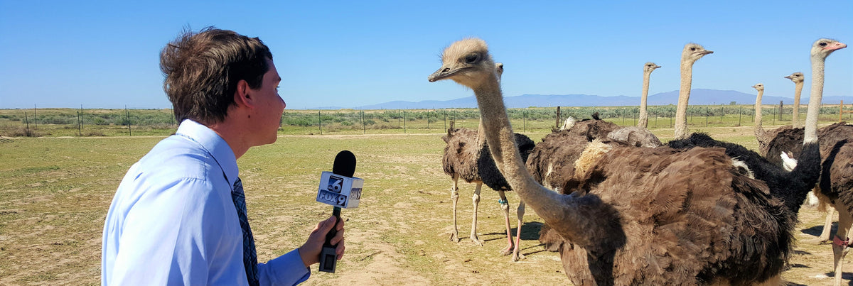 Reporter interviewing an ostrich at American Ostrich Farms