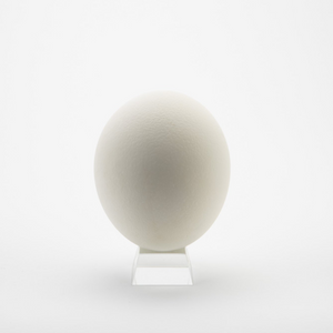 extra large ostrich eggshell on stand