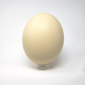 ostrich eggshell on stand