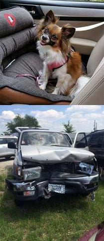 Lyla's Pupsaver after a car crash