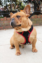 PupSaver Compatible Harness - Available In 5 Sizes