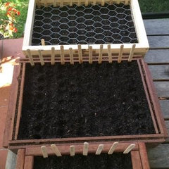 Seedling flats with popstick markers for seeds
