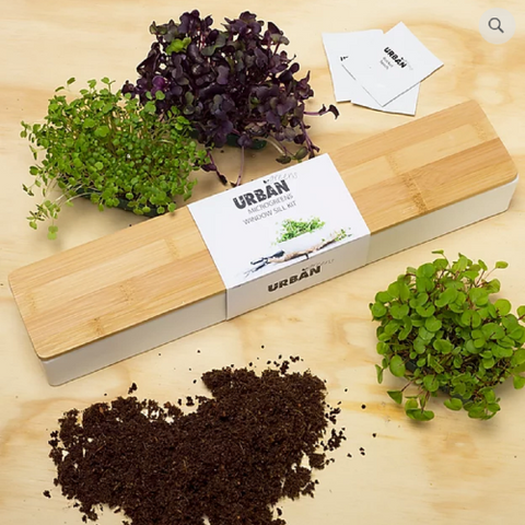 DIY windowsill microgreen growing kit