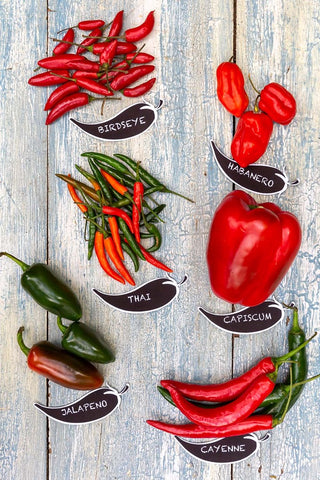 Different types of chillies