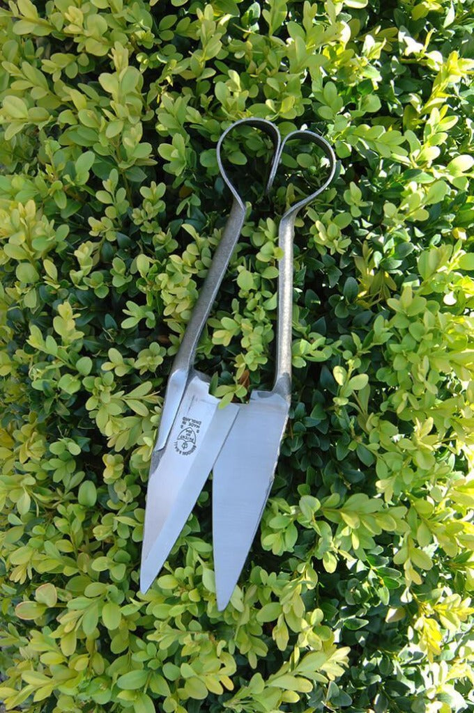 Topiary and Trimming Shears (Small) from Burgon & Ball, on a Hedge