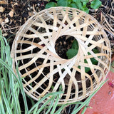 Bamboo Cloche in a Garden Bed, Viewed from Above