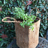 Coir Planter Bag With Handles