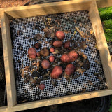 Using the Compost Sieve for Wheelbarrows to Harvest Potatoes