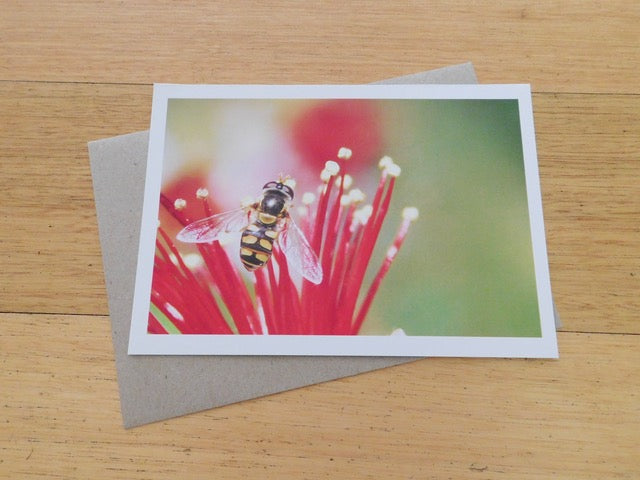 "Greeting Card - Single Design 5"" x 7"" Hoverfly on Guava Blossom"