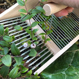 Using the Traditional Fruit and Berry Harvesting Comb to Harvest Midyim Berries