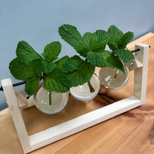 Propagation Station with Mint Cuttings