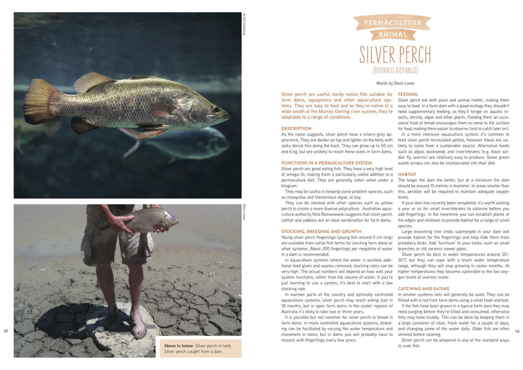 PIP Magazine Pip Magazine - Issue 9 - The Fish Issue Garden Journals & Publications