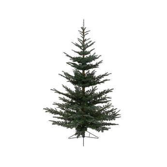 Nobilis Fir - 7ft