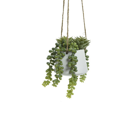 Hanging Potted Plant - Mixed Succulents