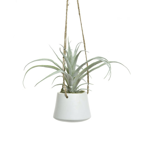 Hanging Potted Air Plant