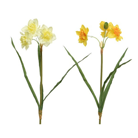Narcissus Stem - Assorted