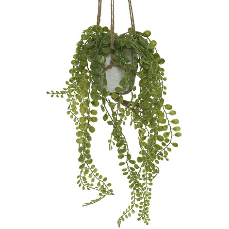 Hanging Potted Plant - String Of Coins