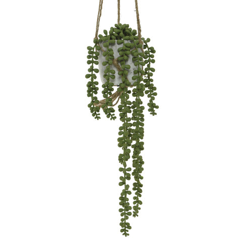 Hanging Potted Plant - String Of Pearls