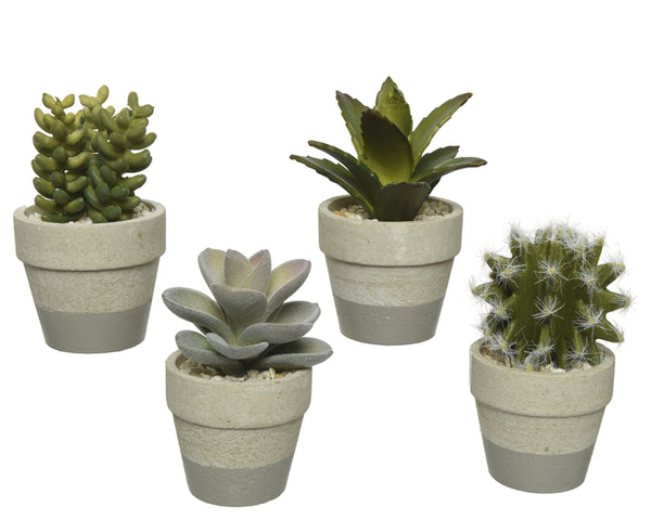 Assorted Potted Succulents & Cacti