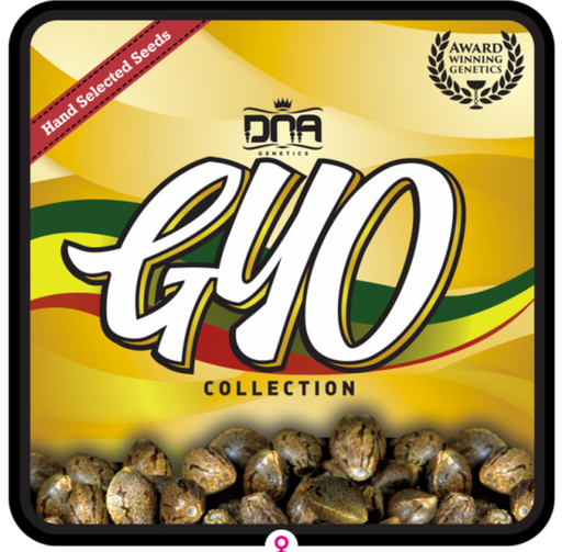 Florida OG - DNA Genitic - 6 Pack - Cannabis Seeds
